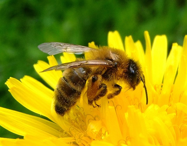 ミツバチと出会おう!Bee Happy!